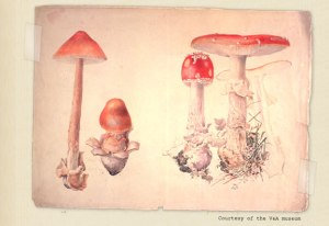 potter_fungi