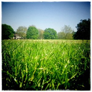 Hilly Fields © LondonSE4