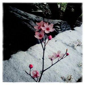 wintry_spring©LondonSE4