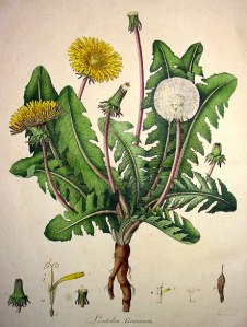 William Curtis - Flora Londinensis - 1777