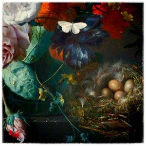 """Jan Van Huysum, """"Vaso di vetro con fiori, papavero e nido di fringuello"""" (dettaglio) - 1720-21 (acquisizione X9134) - The National Gallery"""